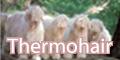 サーモヘアソックス